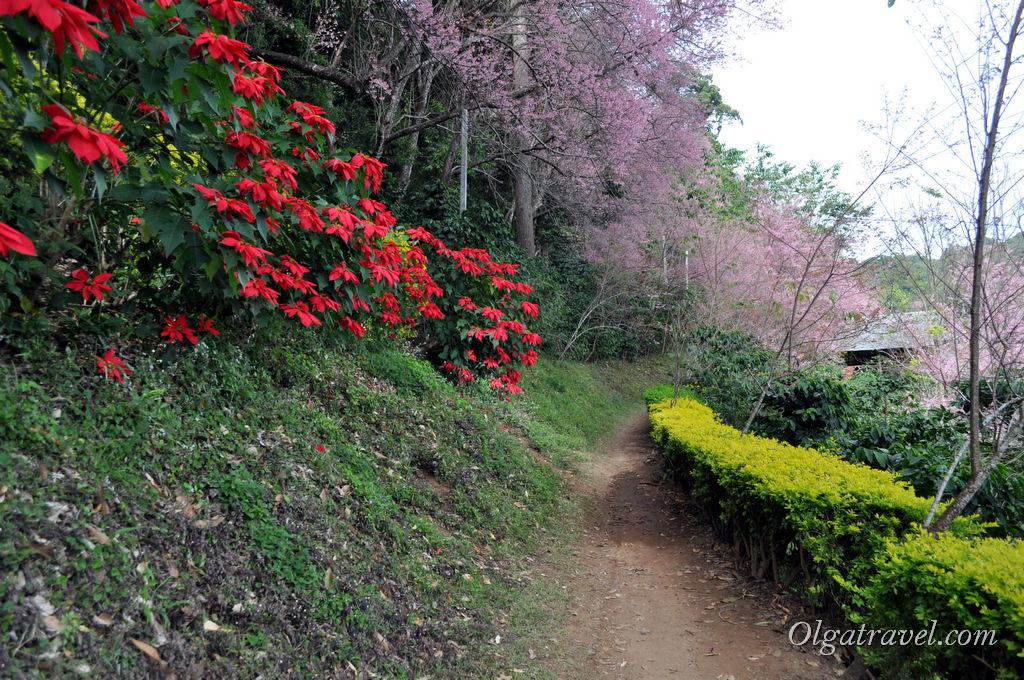 Цветочные пейзажи