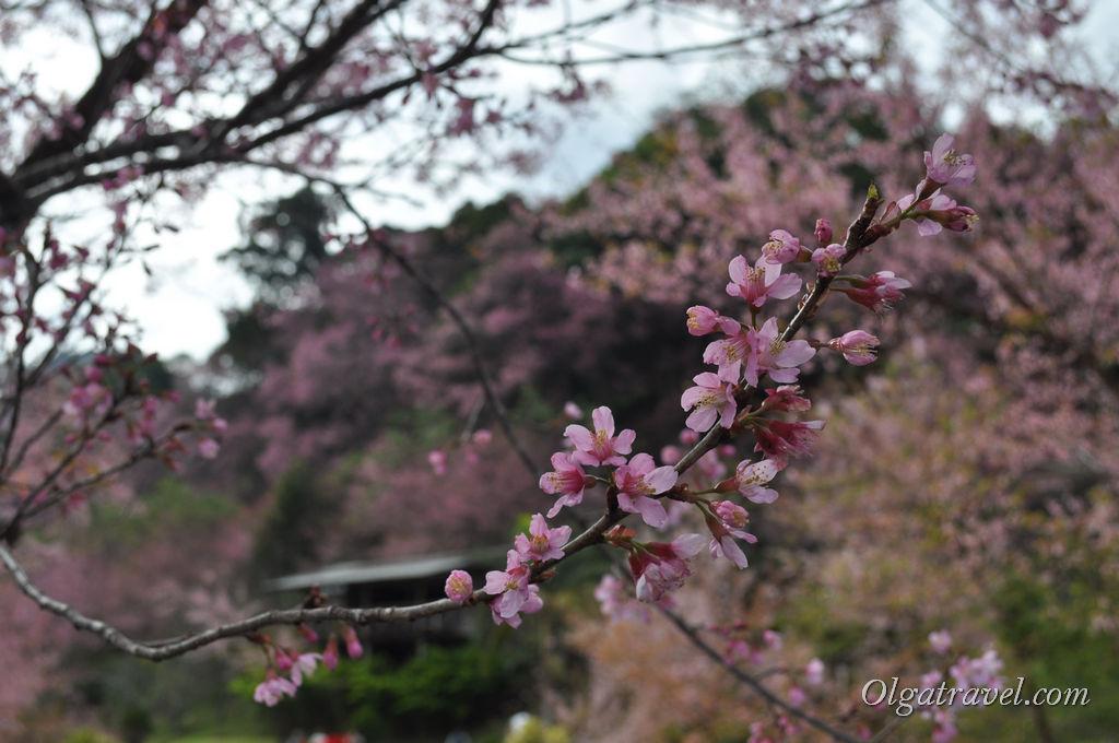 Ветка декоративной вишни
