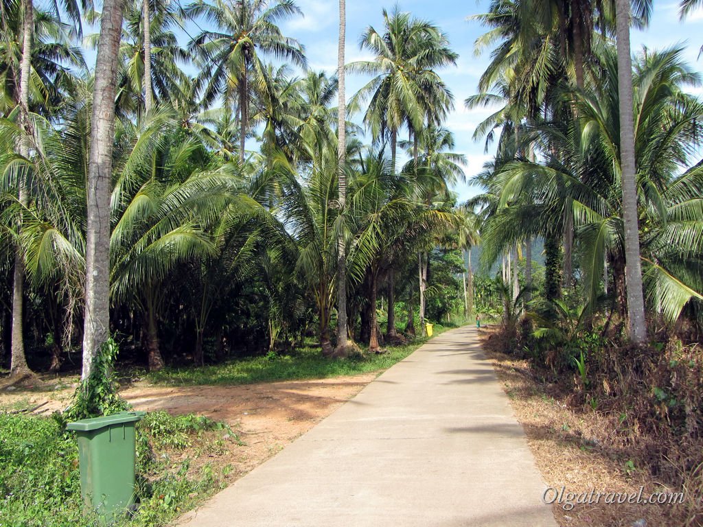Дорога среди пальм :)