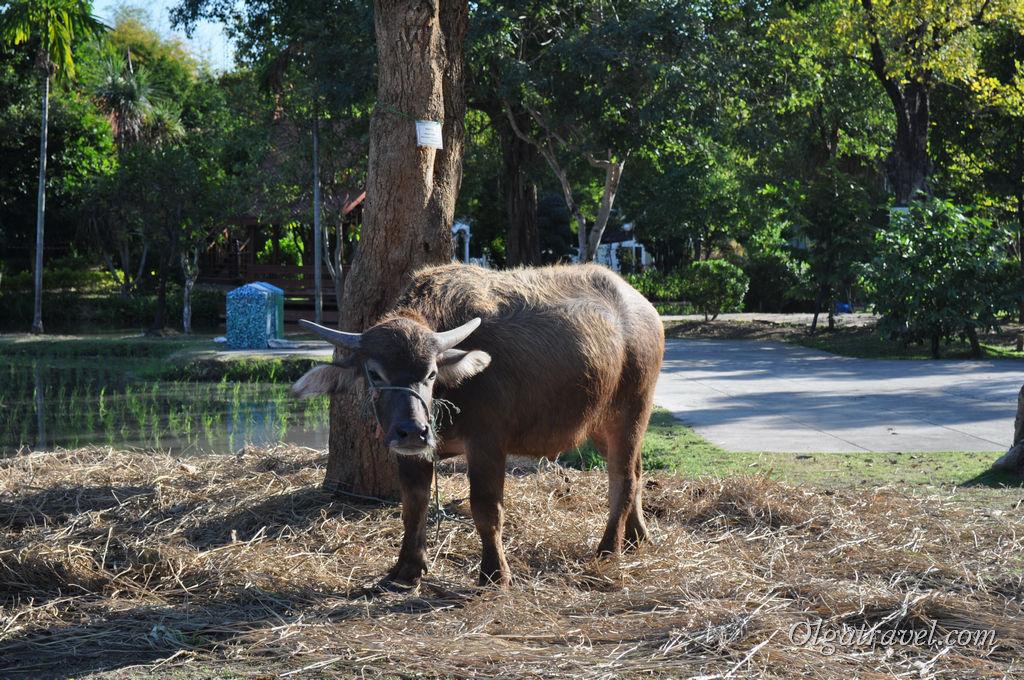 Не один парк - бот сад в Чианг Мае не обходится без животных. Агро туризм все же!