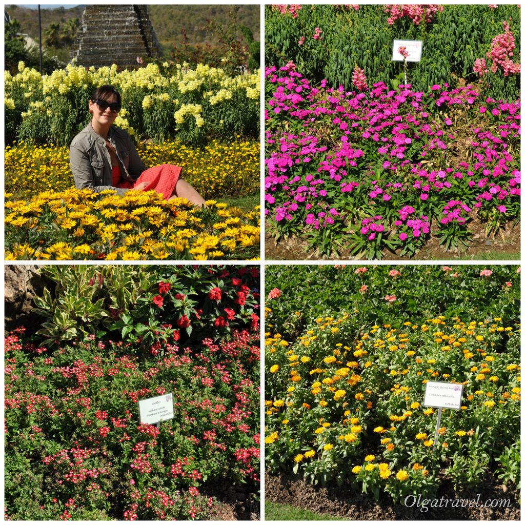 Роял Флор - рай для любителей цветов. Название всех цветов подписано на табличках, но это совсем для любознательных.