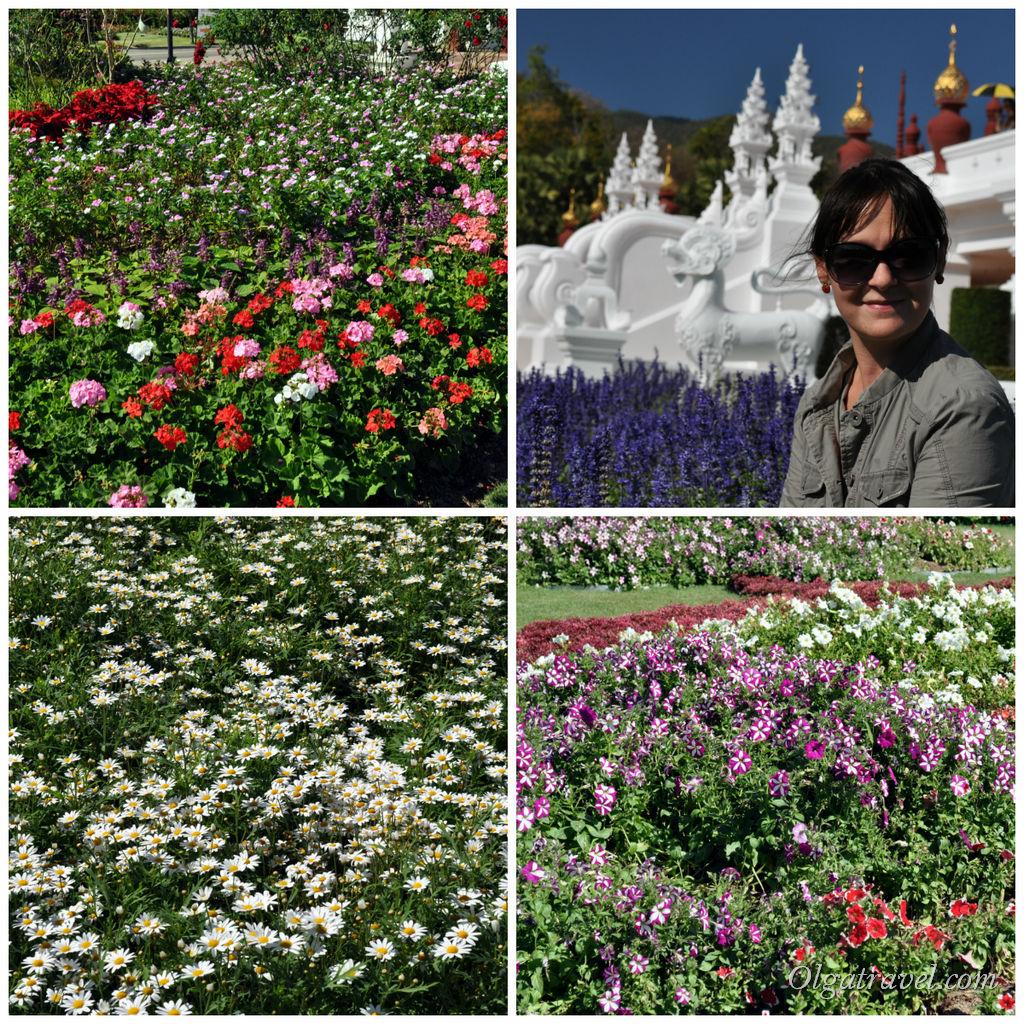 Цветы-цветы :)