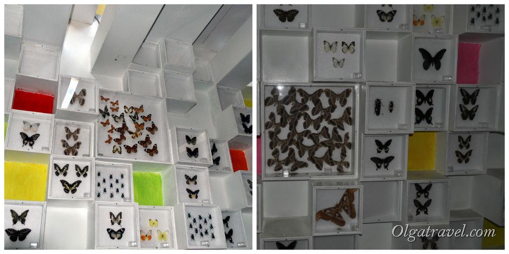 Экспонаты музея - бабочки разных видов