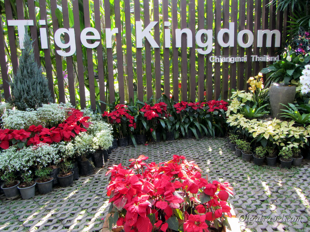 Tiger_Kingdom_Chiang_Mai_1