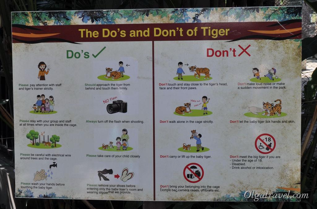 Подробная инструкция в картинках, что можно и нельзя делать с тиграми