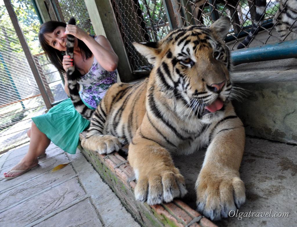 тигриное королевство