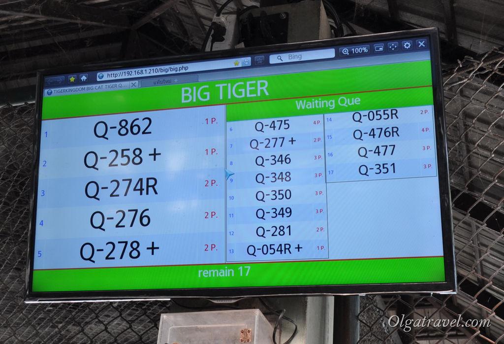 Экран, который висит возле клетки с большими тиграми