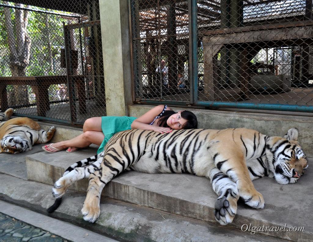 Тигровое королевство