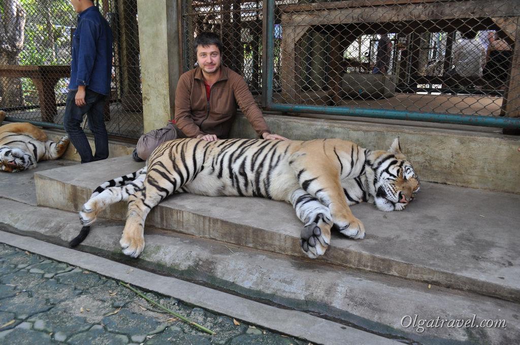Наконец то и Леша попал в клетку к тиграм