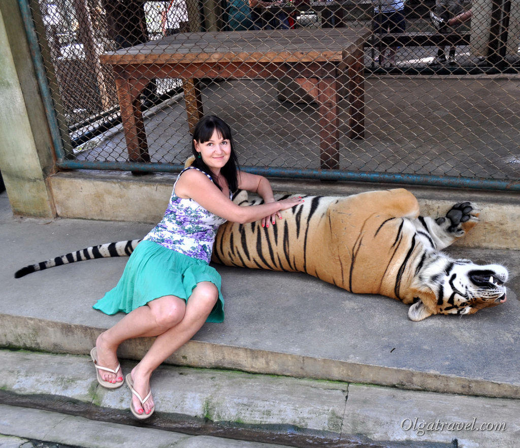 Tiger_Kingdom_Chiang_Mai_43