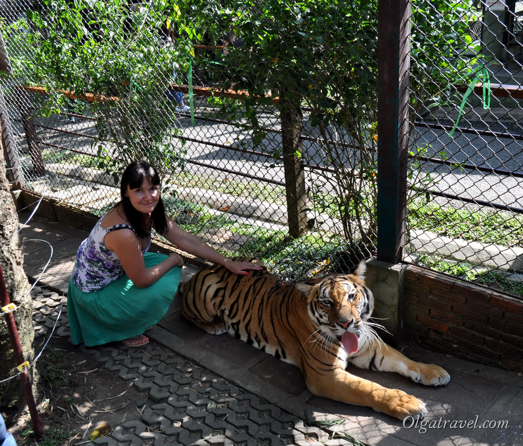 Tiger_Kingdom_Chiang_Mai_48