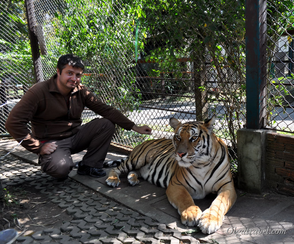 Tiger_Kingdom_Chiang_Mai_50