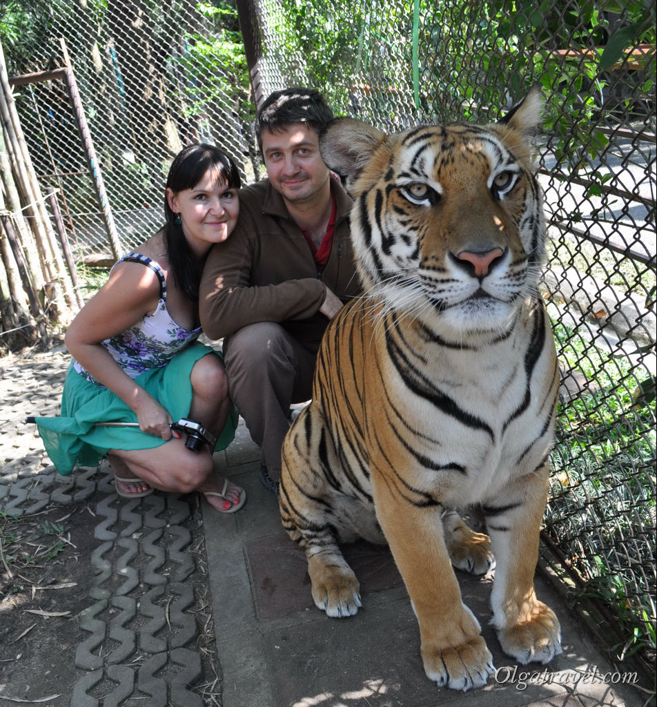 тигры в Чианг мае