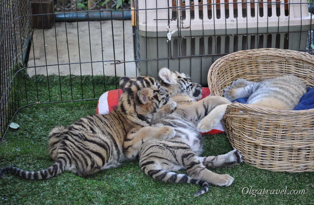 Когда их трое - они не сидят спокойно на месте, а вертятся, прыгают, играют