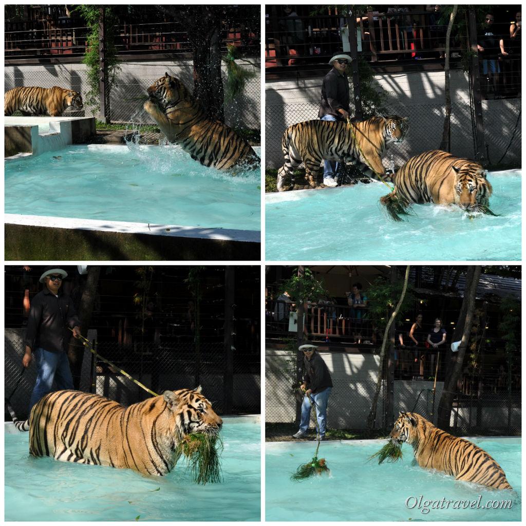 Большие кошки, а воду любят!