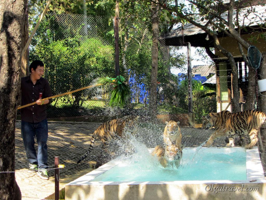 Мокрые тигры и мокрые игры :)
