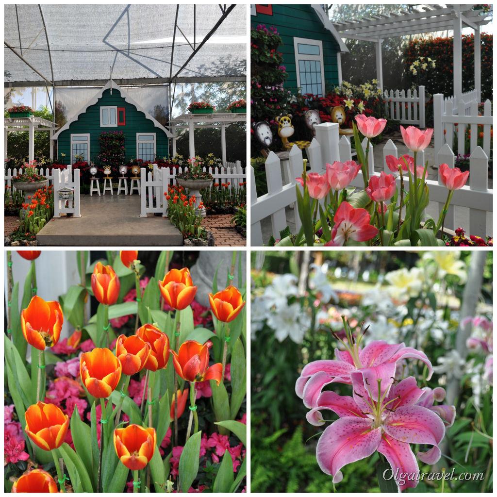 Домики, тюльпаны и лилии