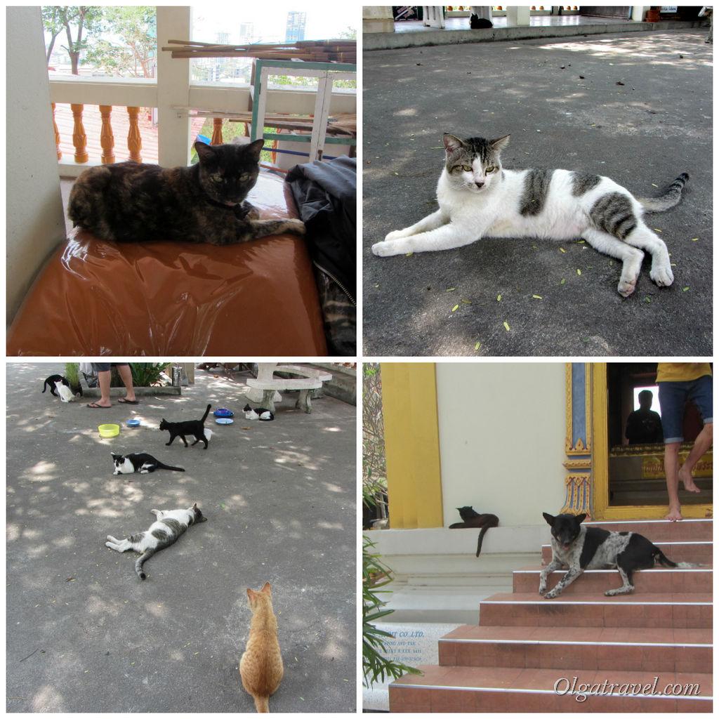 Котики - собачки :)