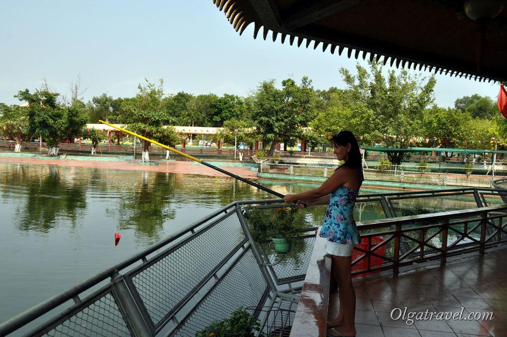 крокодилы парк Suoi Tien
