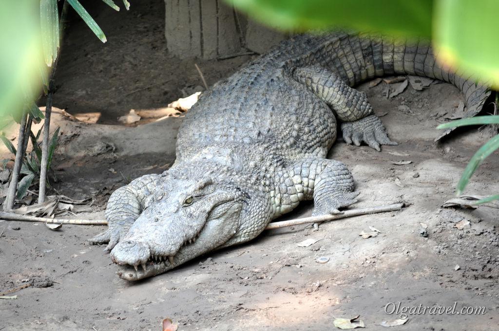 Зоопарк Хошимин