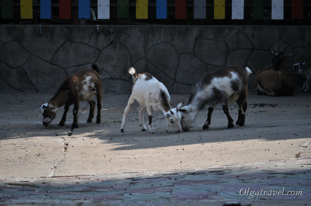 Hochiminh_zoo_47