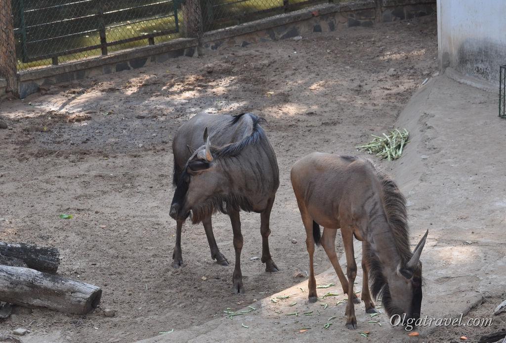 Hochiminh_zoo_54