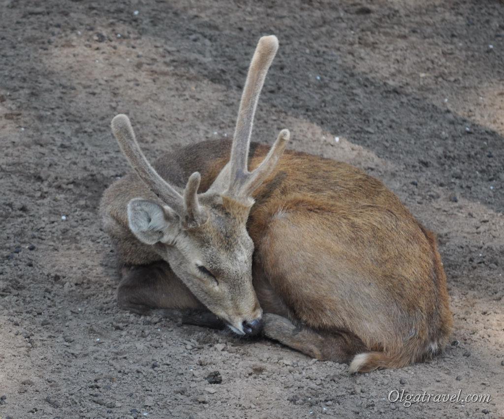 Hochiminh_zoo_55