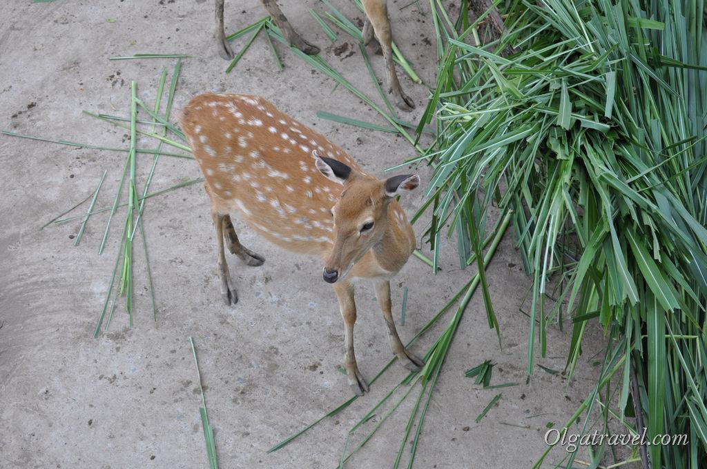 Hochiminh_zoo_56