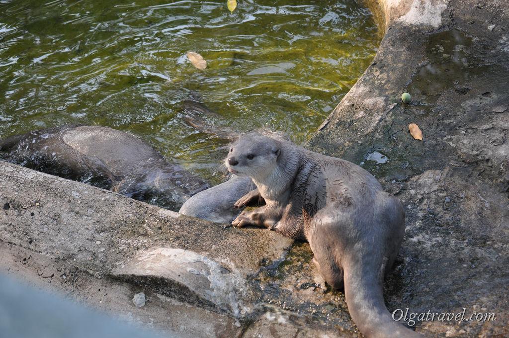 Hochiminh_zoo_65