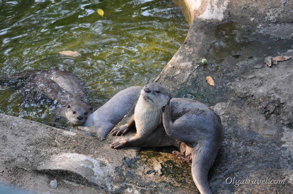 Hochiminh_zoo_66
