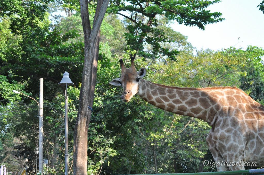 Хошимин зоопарк