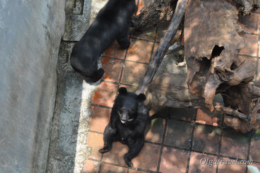 медведи в парке Янг Бей