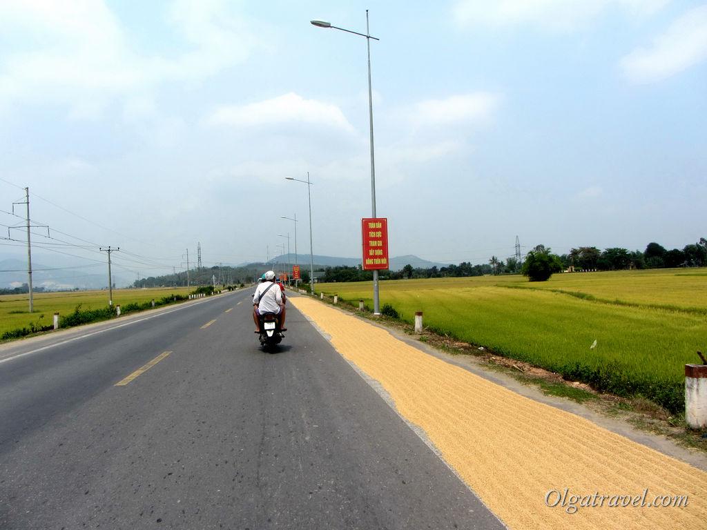 дорога в Янг Бей