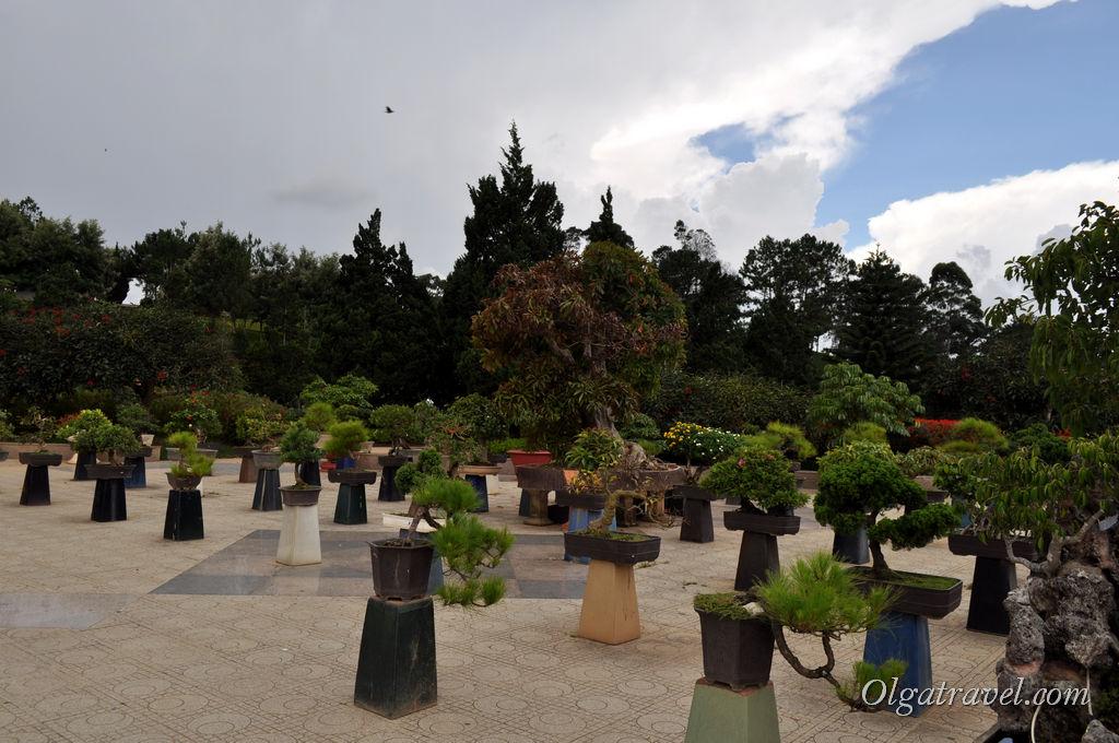 Dalat_flower_park_14
