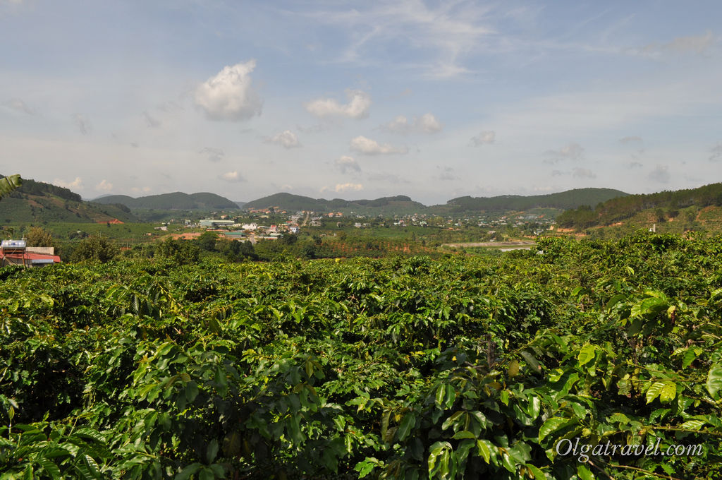 Далат кофейные плантации
