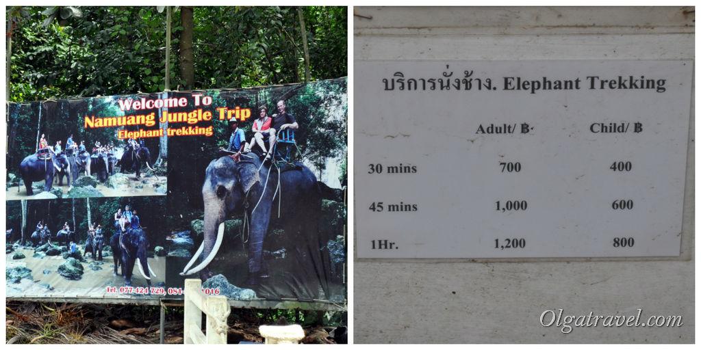 стоимость катания на слонах