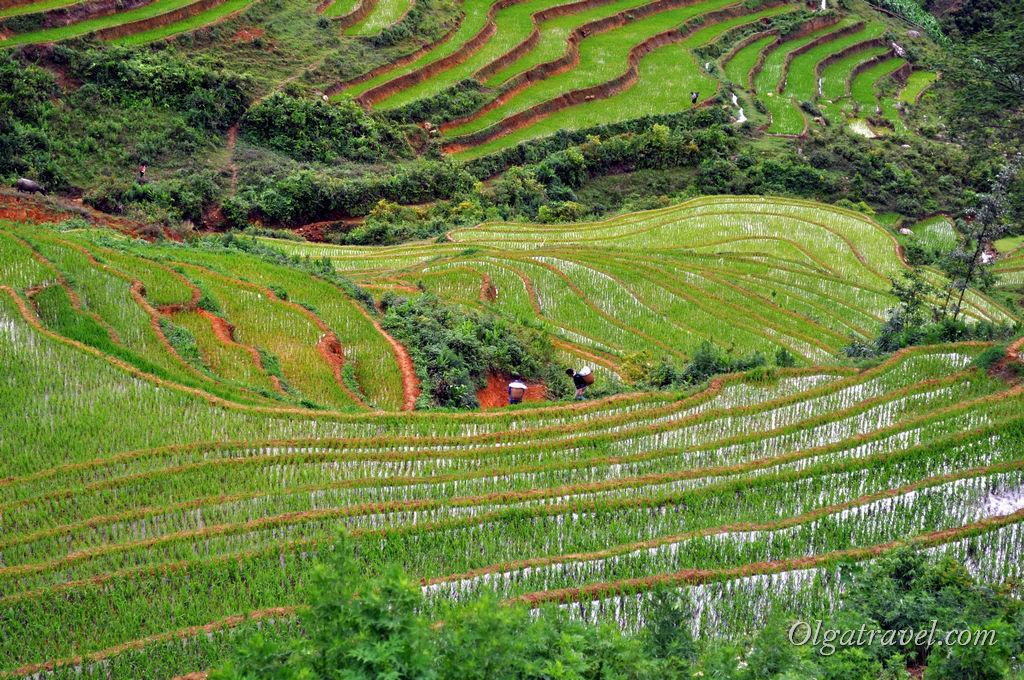 Сапа Вьетнам