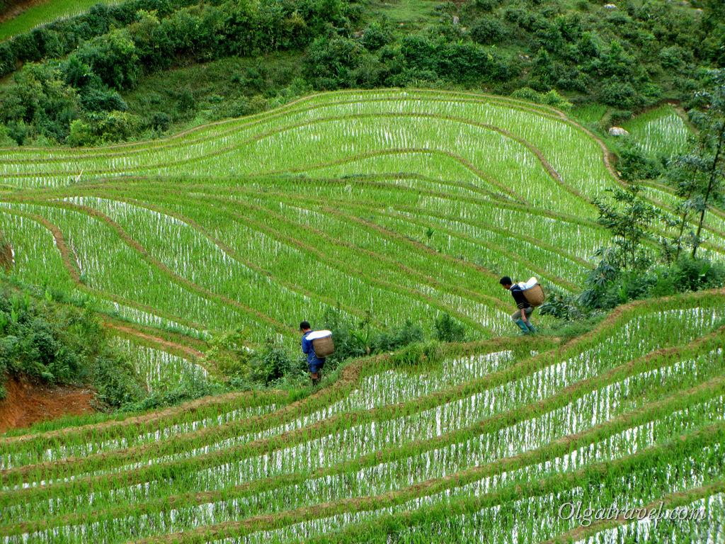 Вьетнам Сапа