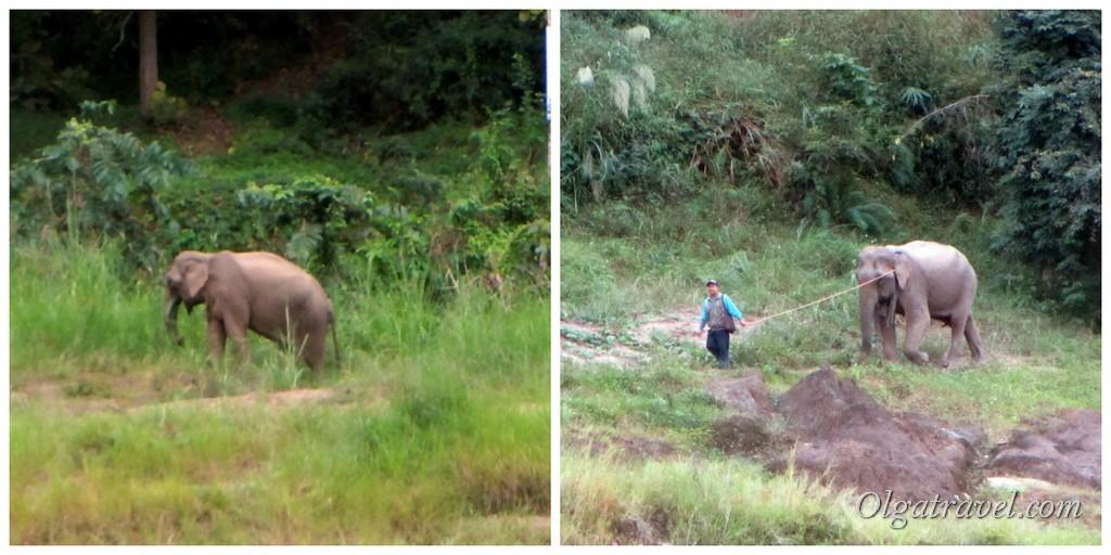 слоны Пакбенг