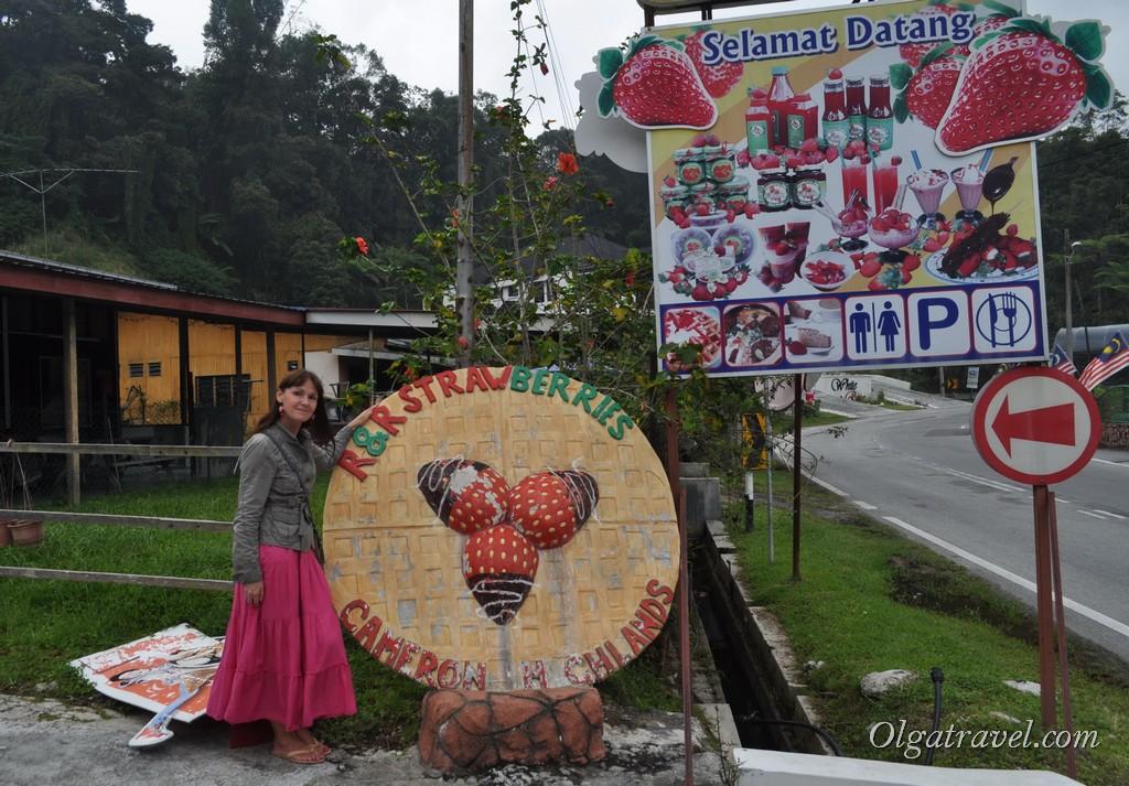 клубника в Малайзии