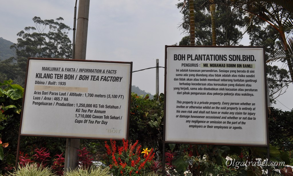 BOH Plantations and Tea Factory