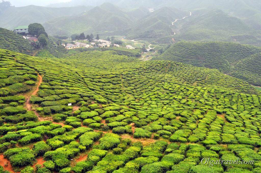 cameron_highlands_tea_plantation_21