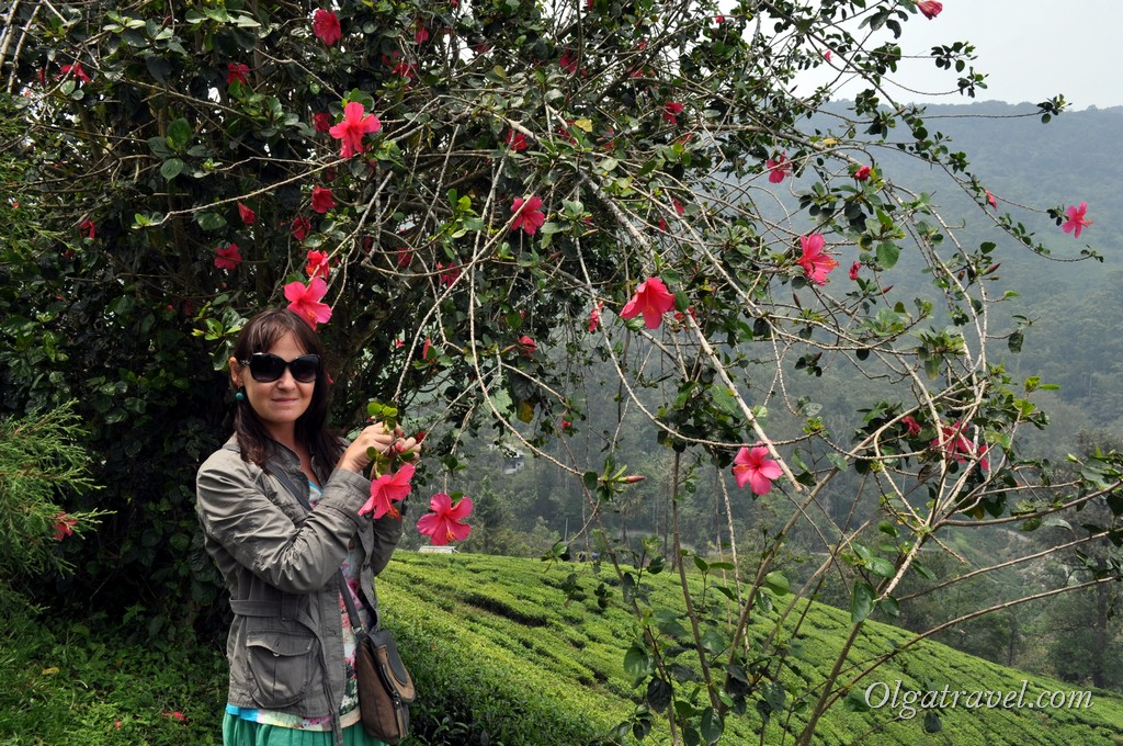 cameron_highlands_tea_plantation_9