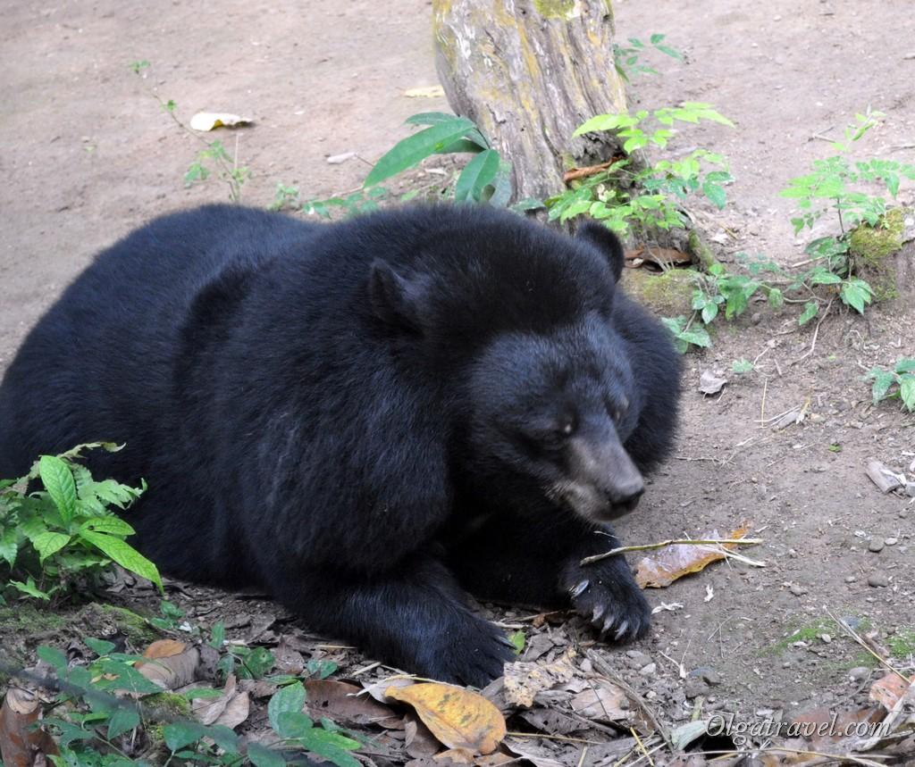 Лаос медведь