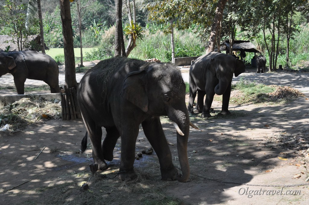 Thai_Elephant_Conservation_Center_15