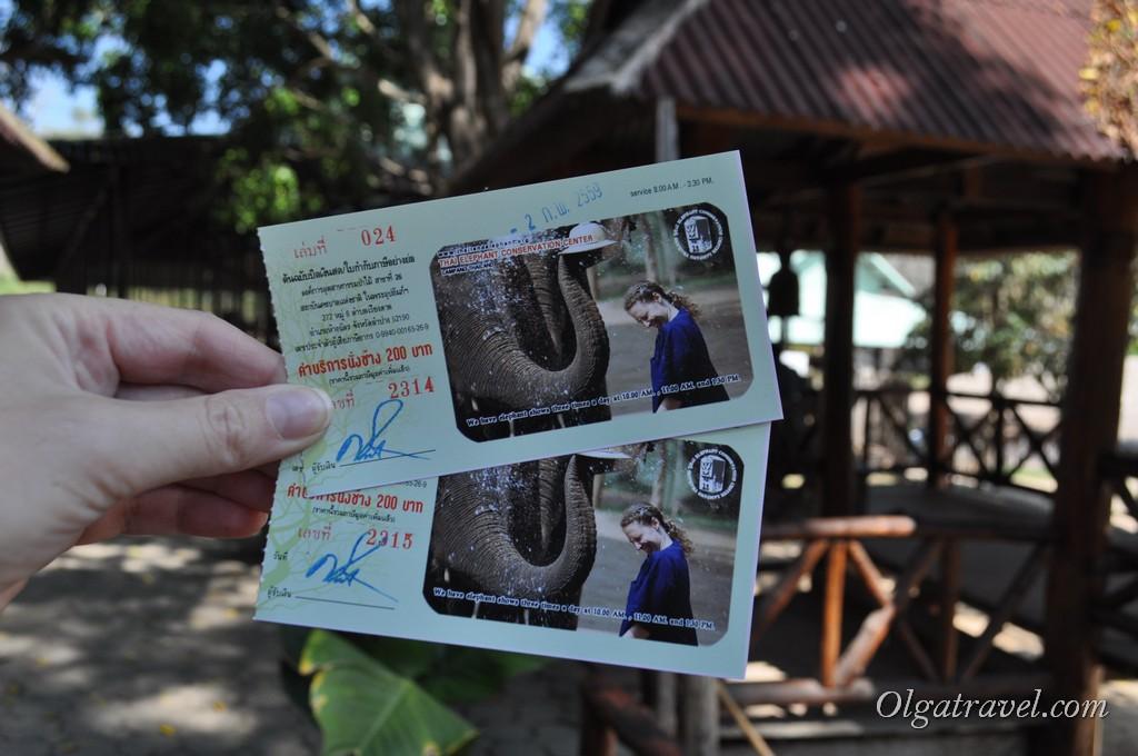 слоны Чианг Май