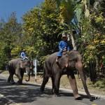 Слоны в Таиланде: центр охраны слонов возле Чианг Мая – лучший слоновий парк в Таиланде!