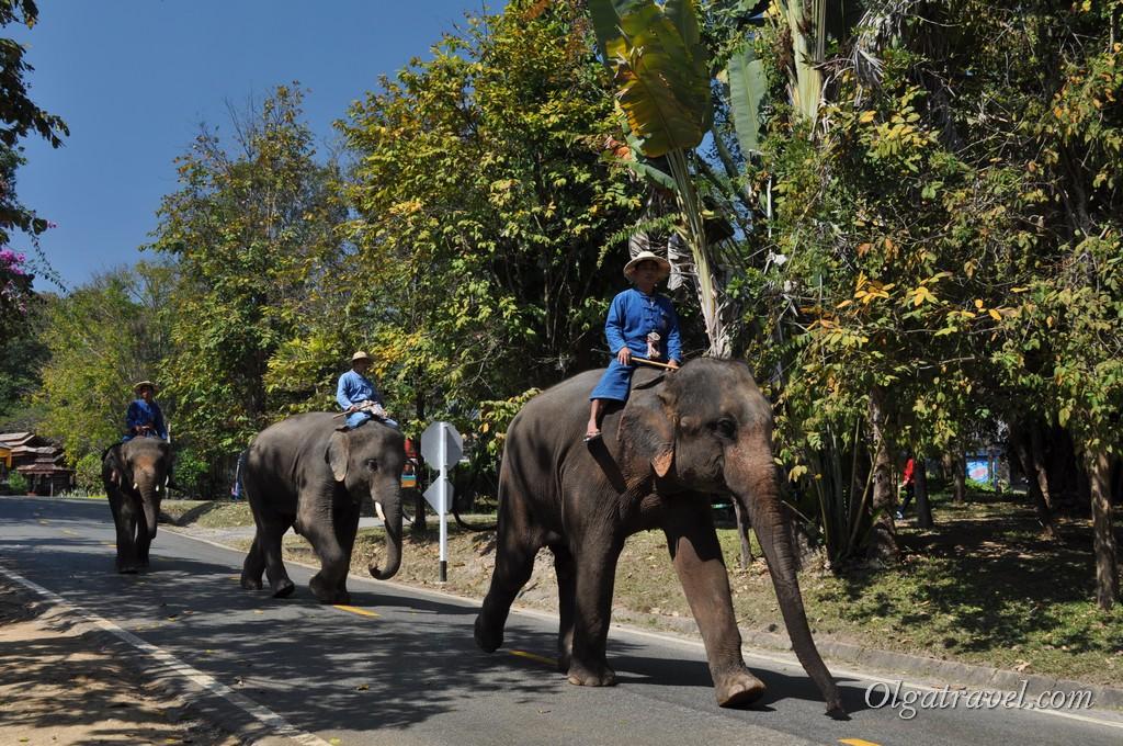 слоны Таиланд