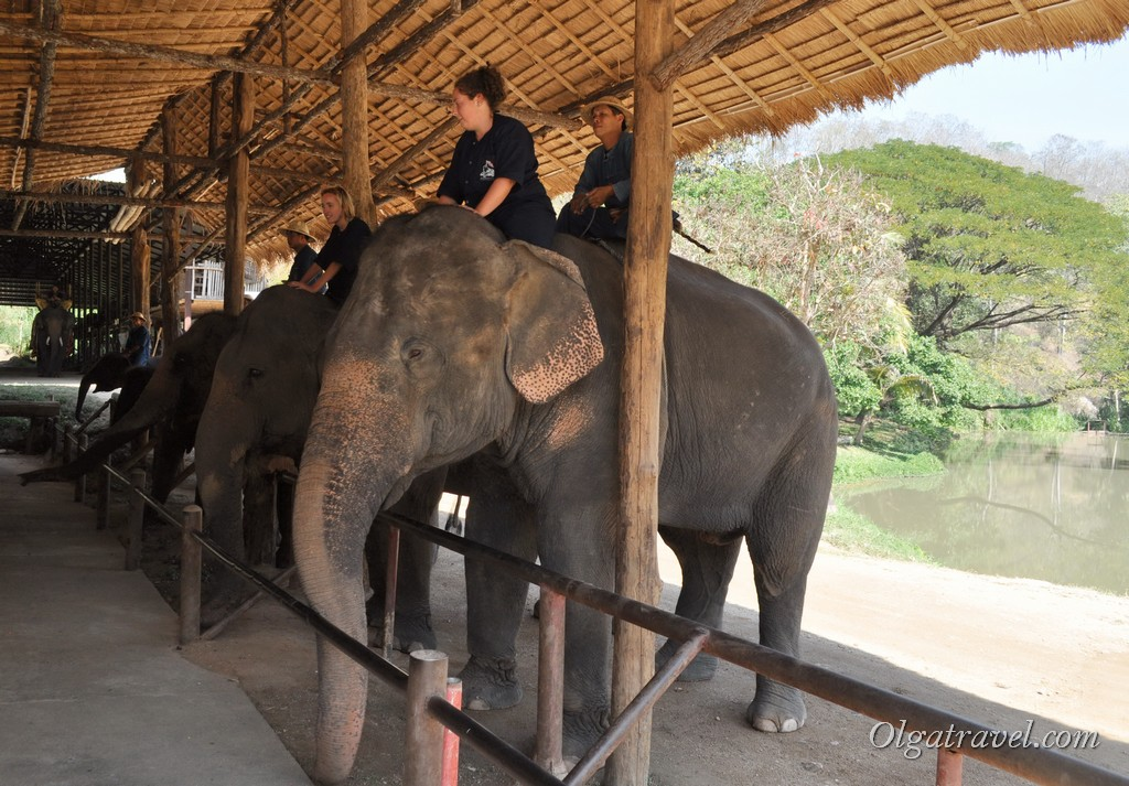 Thai_Elephant_Conservation_Center_18