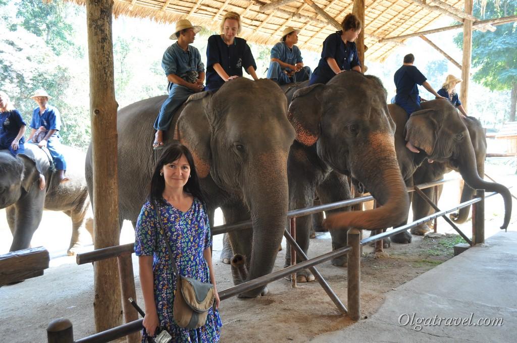 Фото на фоне слонов :)